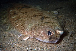 Whats Up?/Looks like flatfish want me to do something but... by Yosuke Tsuchida